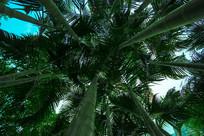 竹子状的树木