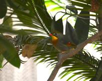 彩色落在树枝上漂亮的小鸟
