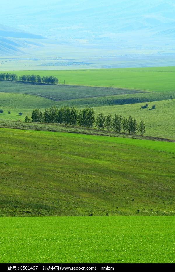 绿色田野风光 图片