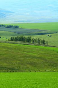 绿色田野风光