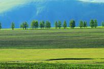 农田树林风景