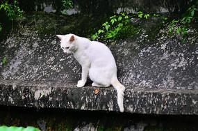 猫小猫猫咪白猫