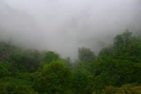 雾中山林绿树