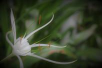 白色花朵背景素材