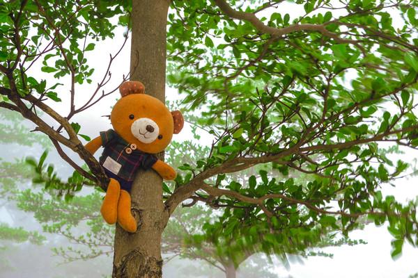 树上挂着玩偶熊