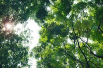 阳光树林光线