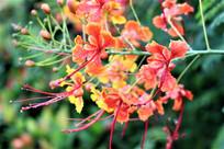 花朵上的露珠高清图片