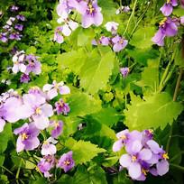 紫色花和草
