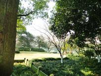 古典园林树林风景