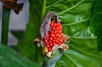 红色种子植物花卉