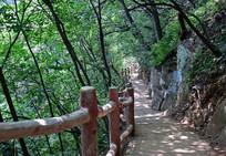 林间的观景道路