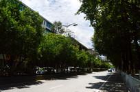 清镇红枫街绿化景观