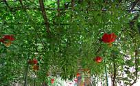 架子上的绿色藤蔓