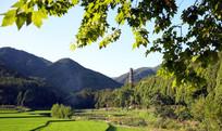 近处的稻田和远山