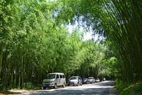 重渡沟竹林风景图