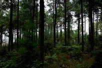 森林树林大自然