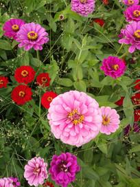 五颜六色的花卉摄影