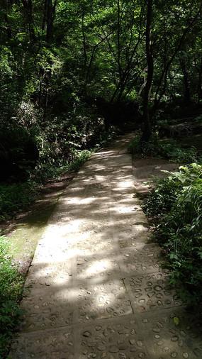 斑驳的林间小路