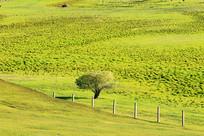 边境地区牧场风景
