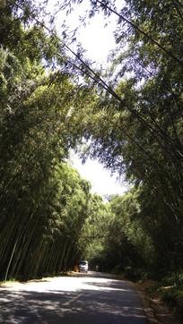 重渡沟的竹林风景图
