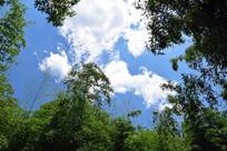 竹林中仰望蓝天
