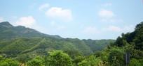 层叠的绿色山岭