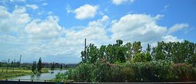 稻田小河与绿色树木
