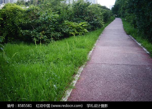 绿草茵茵和红色自行车道图片