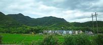 绿色稻田和绿色山脉