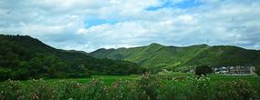 绿色稻田和绿色远山风景