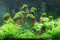 绿色水草中的小鱼