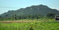 绿色田地和绿色山岭