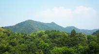 茂密的树林和远山风景