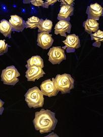 夜晚中盛开的黄玫瑰