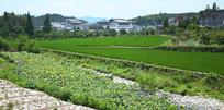 一片绿色的农田