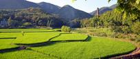 一片绿色的庄稼地