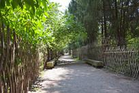 绿荫小道景观