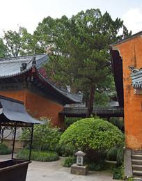 寺院建筑间的绿植