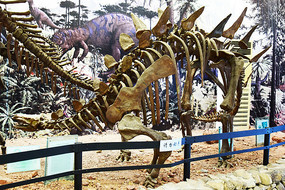 恐龙化石骨架复原