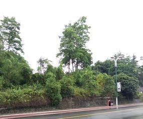 绿色树木树叶