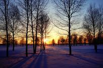 雪原树林暮色风景