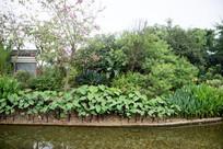 公园绿植景观