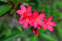 红色的小花朵
