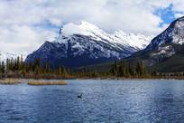 雪山湖泊天鹅