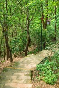 飞鹅岭公园的山路