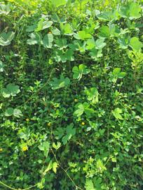 野外的植物