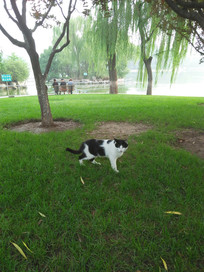 草丛中的一只专注的小猫咪