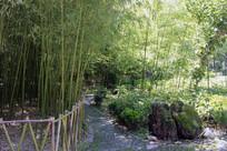 鸡冠洞景区的竹林小道