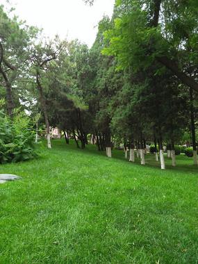 满眼绿色的小树林