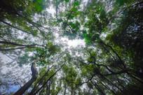 仰视惠州飞鹅岭的树